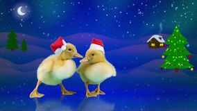 Cute funny newborn ducklings in Santa hats sliding on the ice. Winter night background with Christmas tree, snowfall, moon, starts and home, copy space stock video footage