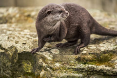 Cute funny otter at zoo in Berlin stock photos