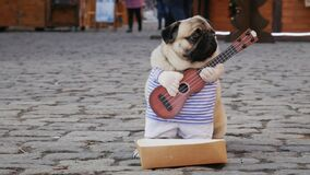 Cute funny pug dog earning with playing music wearing in costume with guitar on the city street, passerby throws money