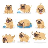 Cute funny pug dog set, dog in different poses and situations cartoon vector Illustrations Stock Images
