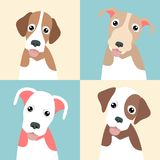 Cute Funny pupply pack collection Stock Photo