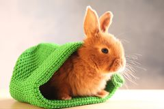 Cute funny rabbit in green hat. On wooden table Stock Images