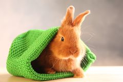 Cute funny rabbit in green hat. On wooden table Royalty Free Stock Image