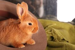 Cute funny rabbit in hat,. Closeup Stock Image