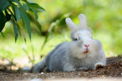 Cute Funny Rabbit Outdoors Lying on the Ground Royalty Free Stock Photos