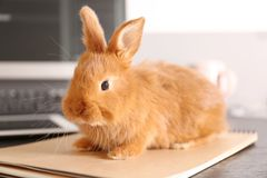 Cute funny rabbit. On wooden desk Stock Image