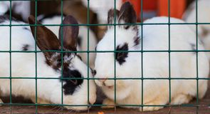 Cute funny rabbits in a cage closeup. domestic fluffy pets. animal protection. Cute funny rabbits in a cage closeup. domestic fluffy pets stock images