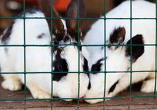 Cute funny rabbits in a cage closeup. domestic fluffy pets. animal protection. Cute funny rabbits in a cage closeup. domestic fluffy pets stock photos