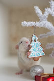 Cute funny rat on a background of Christmas decorations Royalty Free Stock Photography