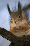 Cute funny squirrel sitting on a tree in the Park stock photos
