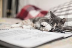A nice three-colored kitten lies on a notebook and chews a penci. A cute, funny three-colored kitten lies on a notebook and chews a pencil Royalty Free Stock Images