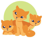 Cute and funny three kittens Royalty Free Stock Photography