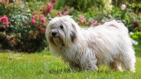 Cute Funny white Dog Stock Photo