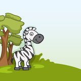 Cute funny zebra concept. Royalty Free Stock Photography