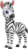 Cute funny zebra Stock Photography