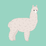 Cute furry alpaca Royalty Free Stock Photos