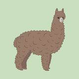 Cute furry brown alpaca Royalty Free Stock Images