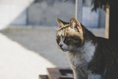 Cute furry cat searching for food in the summer. Photo taken in Transylvania, Romania stock photography