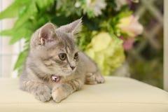Cute, Furry Cat Sitting Royalty Free Stock Photos