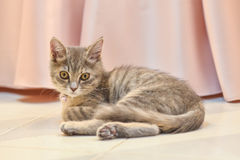 Cute, furry cat sitting Stock Photography