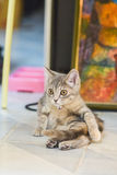 Cute, furry cat sitting Royalty Free Stock Image