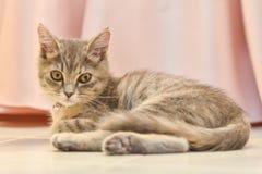 Cute, furry cat sitting Stock Image