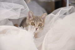 Cute, furry cat sitting Royalty Free Stock Images