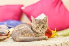 Cute, furry cat sitting Stock Photo