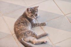 Cute, furry cat sitting Royalty Free Stock Photo