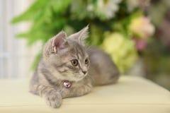 Cute, furry cat sitting Stock Photos