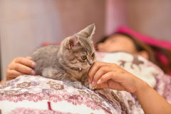 Cute, furry cat sitting Stock Images