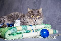 Cute furry home cat with Christmas balls and beads on green plai. Cute adorable furry cat with silver gift box, Christmas balls and beads on green plaid Royalty Free Stock Photo