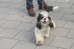 Cute, furry little dog Royalty Free Stock Photography