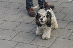 Cute, furry little dog Stock Photos