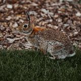 Cute furry rabbit bunny easter outdoor wild. Animal Stock Photography