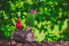 Cute garden bird model royalty free stock images