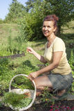 Cute gardener picking organic mini carrots Royalty Free Stock Photography