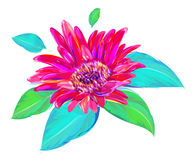The cute gerbera on white background Royalty Free Stock Photos
