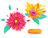 The cute gerbera on white background Royalty Free Stock Photography