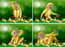 Cute gibbon in four scenes Stock Images