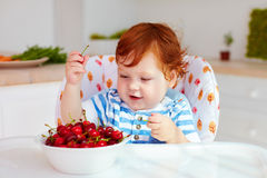 Cute ginger baby boy sitting in highchair and tasting ripe cherries Royalty Free Stock Photo