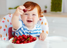 Cute ginger baby boy sitting in highchair and tasting ripe cherries Royalty Free Stock Image