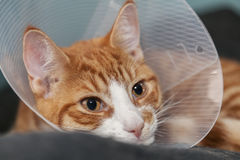 Cute ginger cat with cone Royalty Free Stock Photos