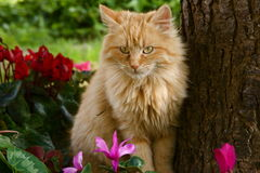 Cute ginger cat and flowers Royalty Free Stock Image