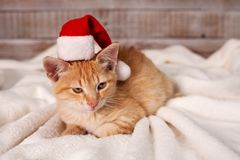 Cute ginger cat getting in the christmas mood - wearing a santa stock images