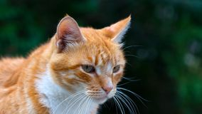 Cute ginger cat on green background stock images