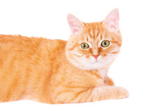 Cute ginger cat lying on the floor. Stock Photography