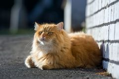 Cute ginger cat lying on the street Stock Photography