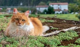 Cute ginger cat rests among mosses and lichens royalty free stock photography