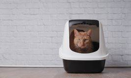 Cute ginger cat sitting in a litter box and look to the camera. Cute Tabby cat sitting in a litter box and look to the camera Stock Images